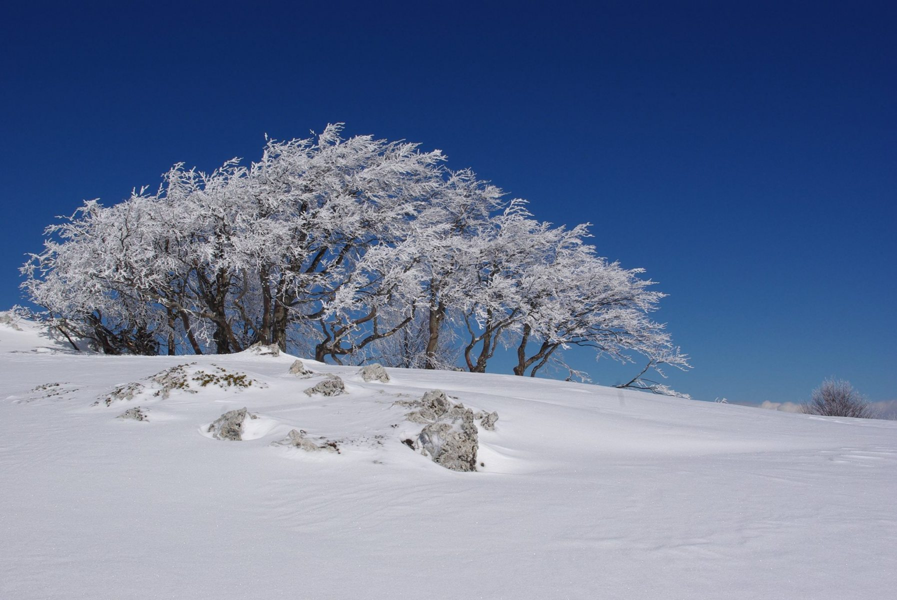 natura-in17