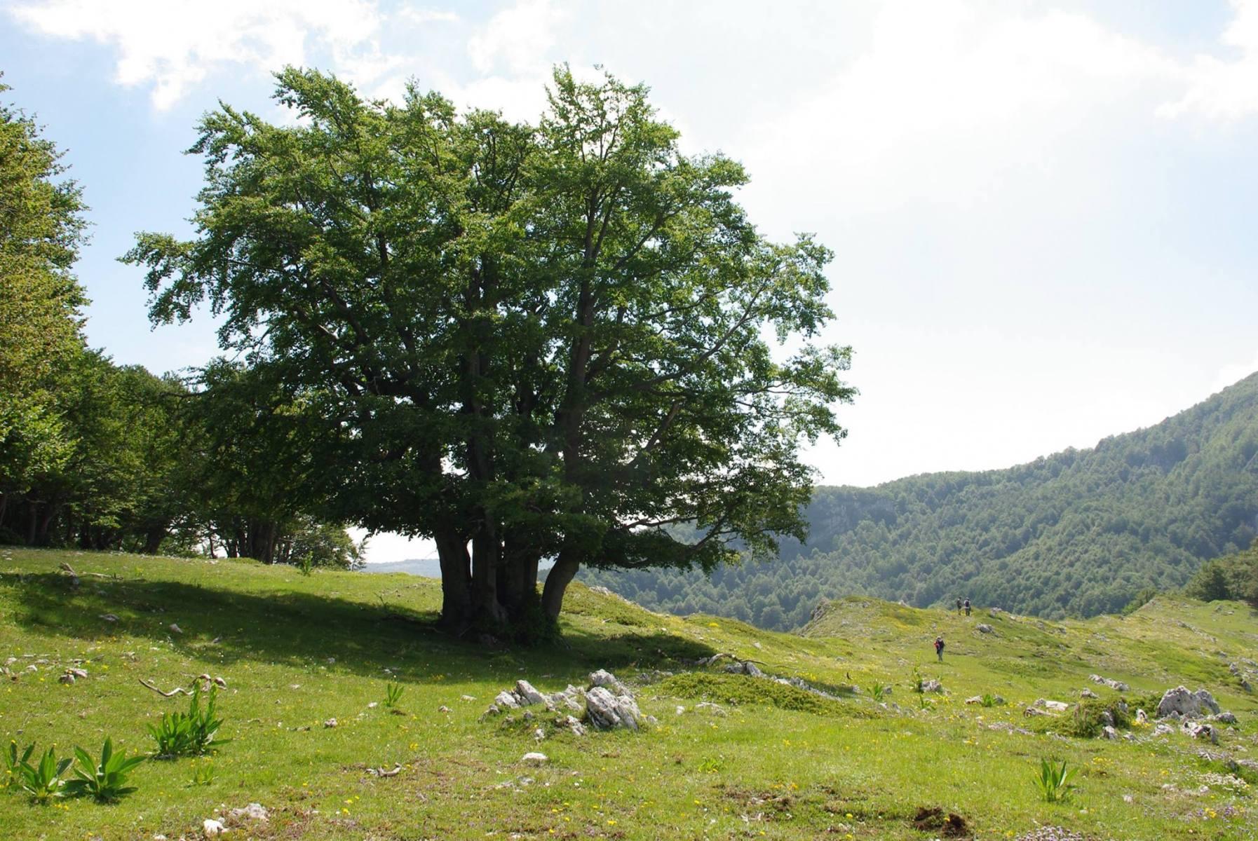 natura-es16