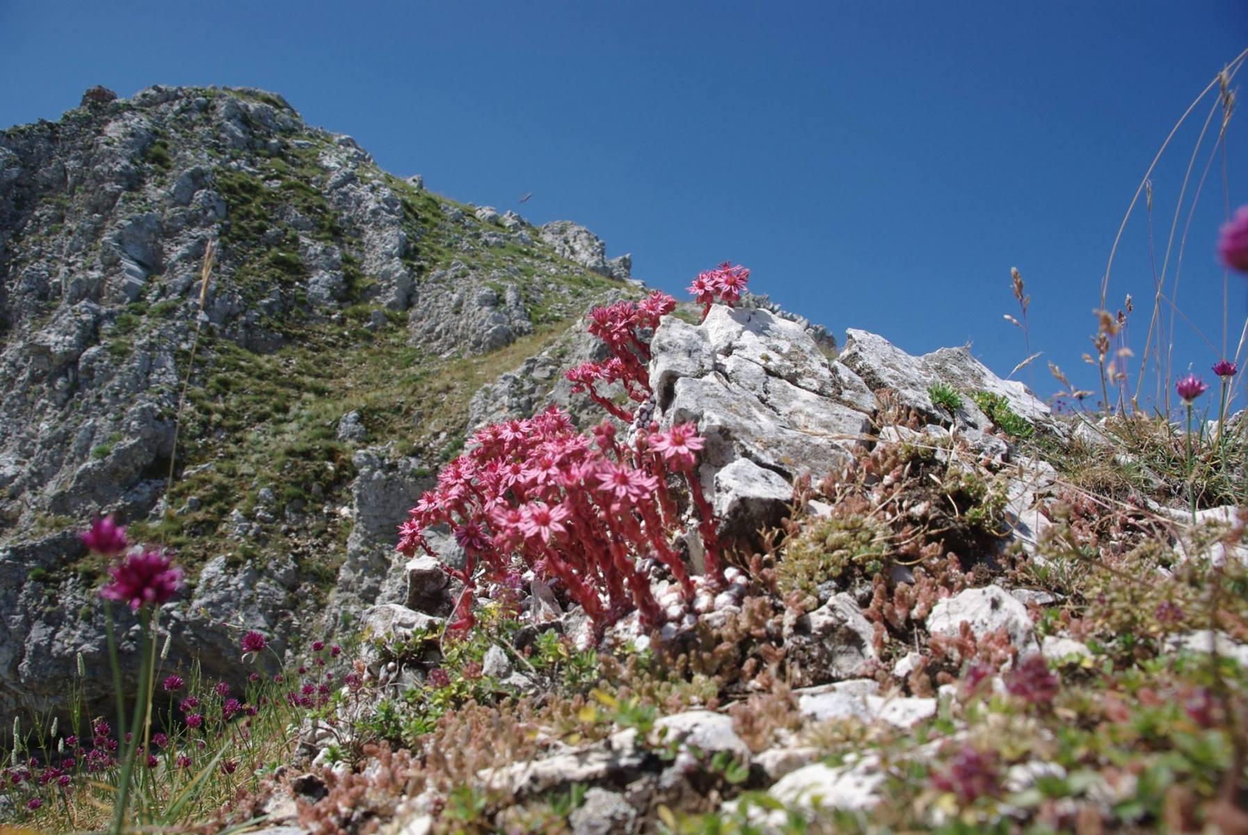 natura-es29